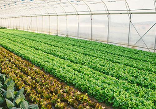 Commercial Farming National Development Bank